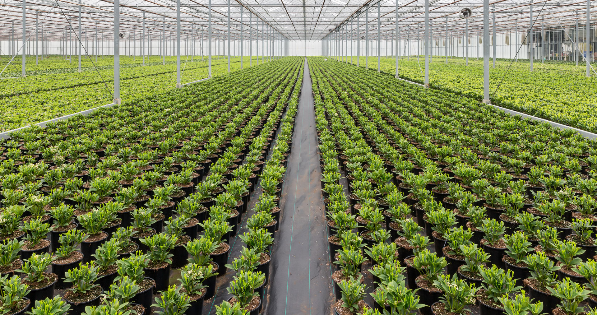 Image of many plants growing inside of a nursery
